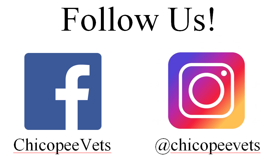 Veterans services chicopee ma for Follow us on instagram template