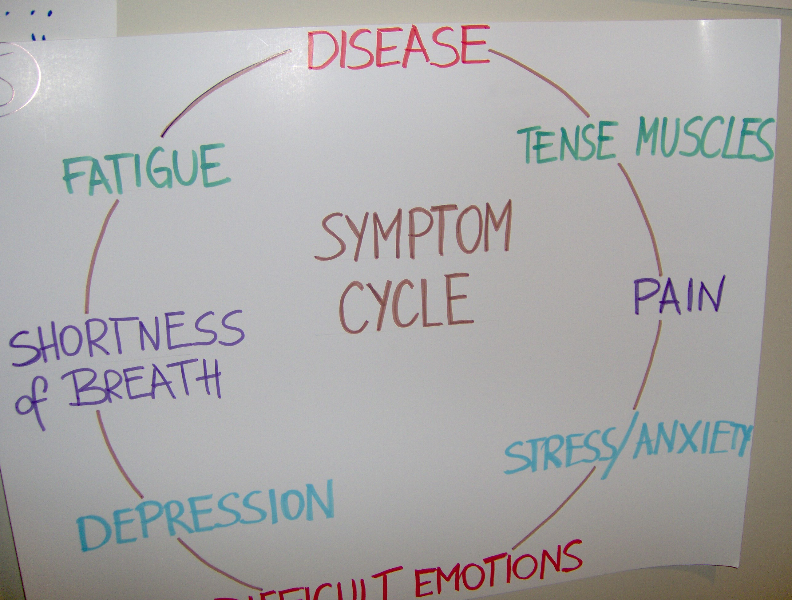 Symptom flow chart on poster board